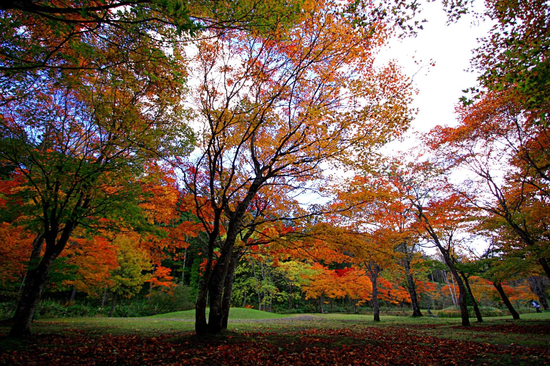 福原山荘 艷麗的楓葉