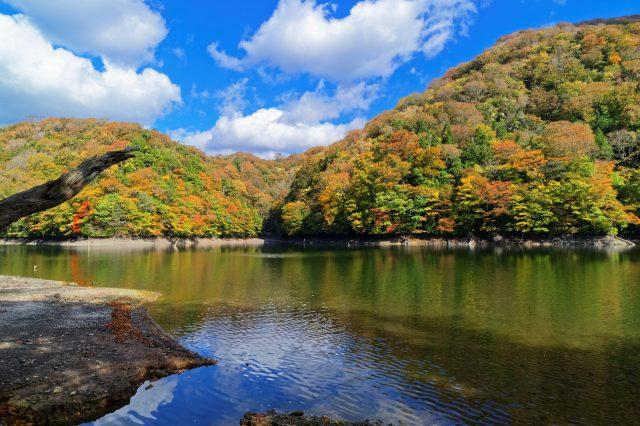 【青森红叶景点】人间仙境「鸡头场之池」。澄净如镜的湖水和娇媚的榉树林♪