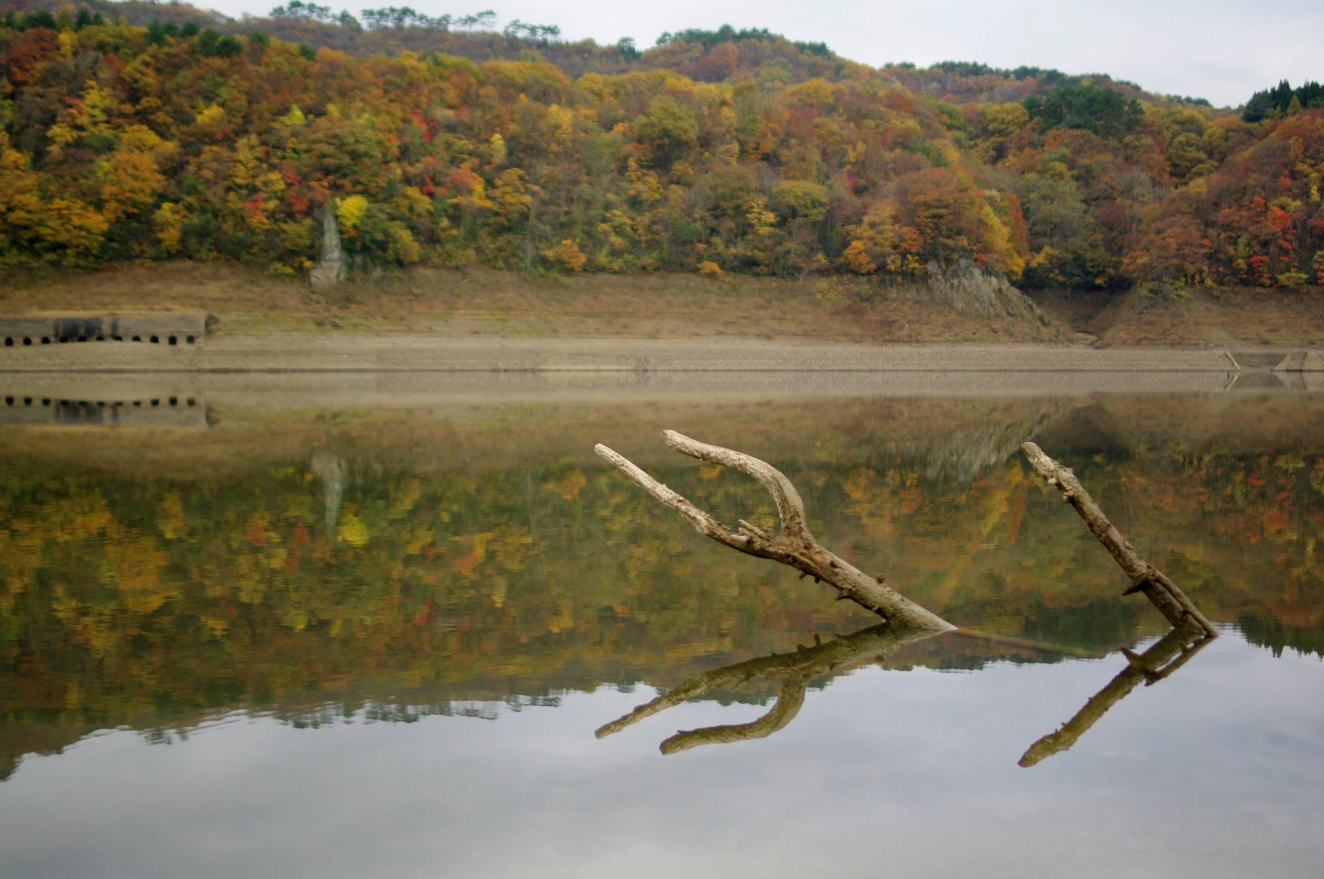 倒影在湖面的紅葉