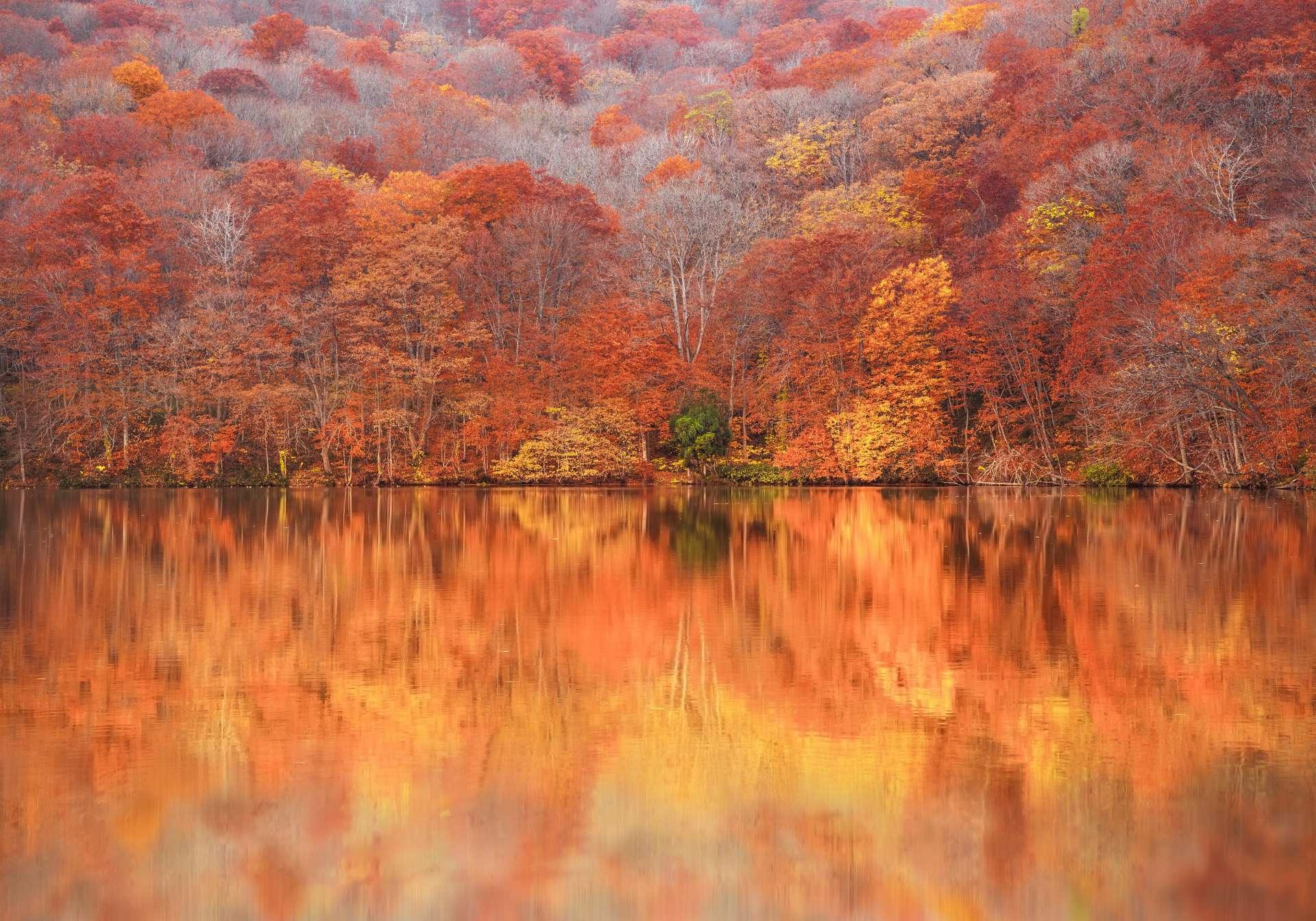 """日出時好像在水面上""""燃燒""""的紅葉!"""