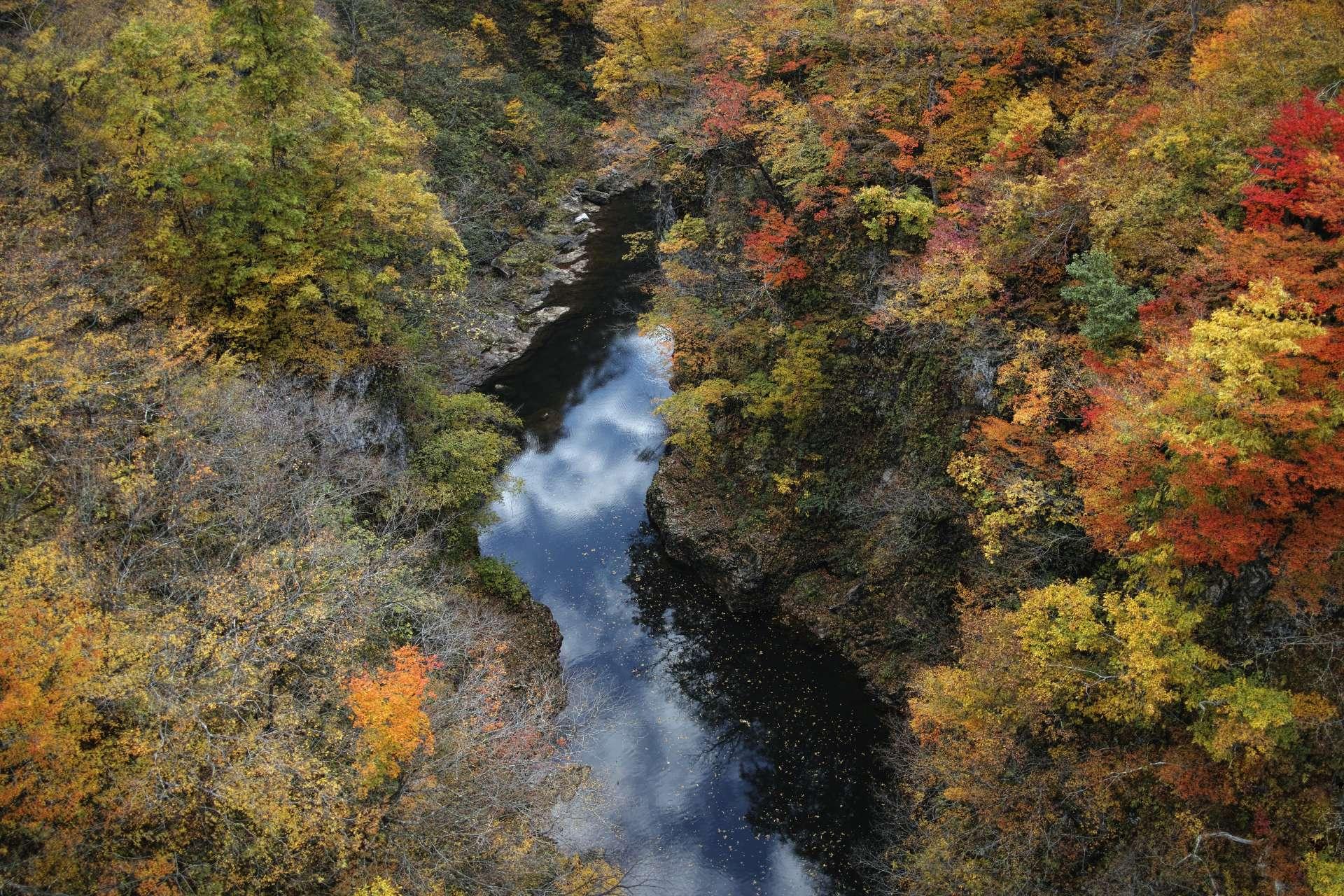 红叶季节的梵字川溪谷♡