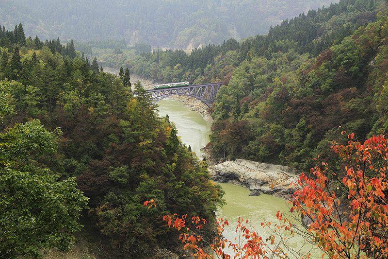 枫景与火车的绝佳美景!