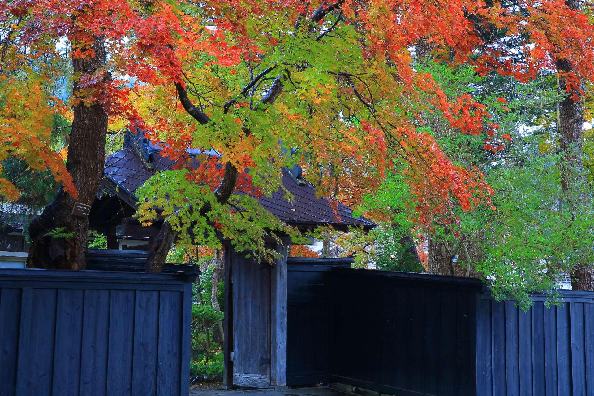 枫叶和黑墙形成红与黑的典雅搭配