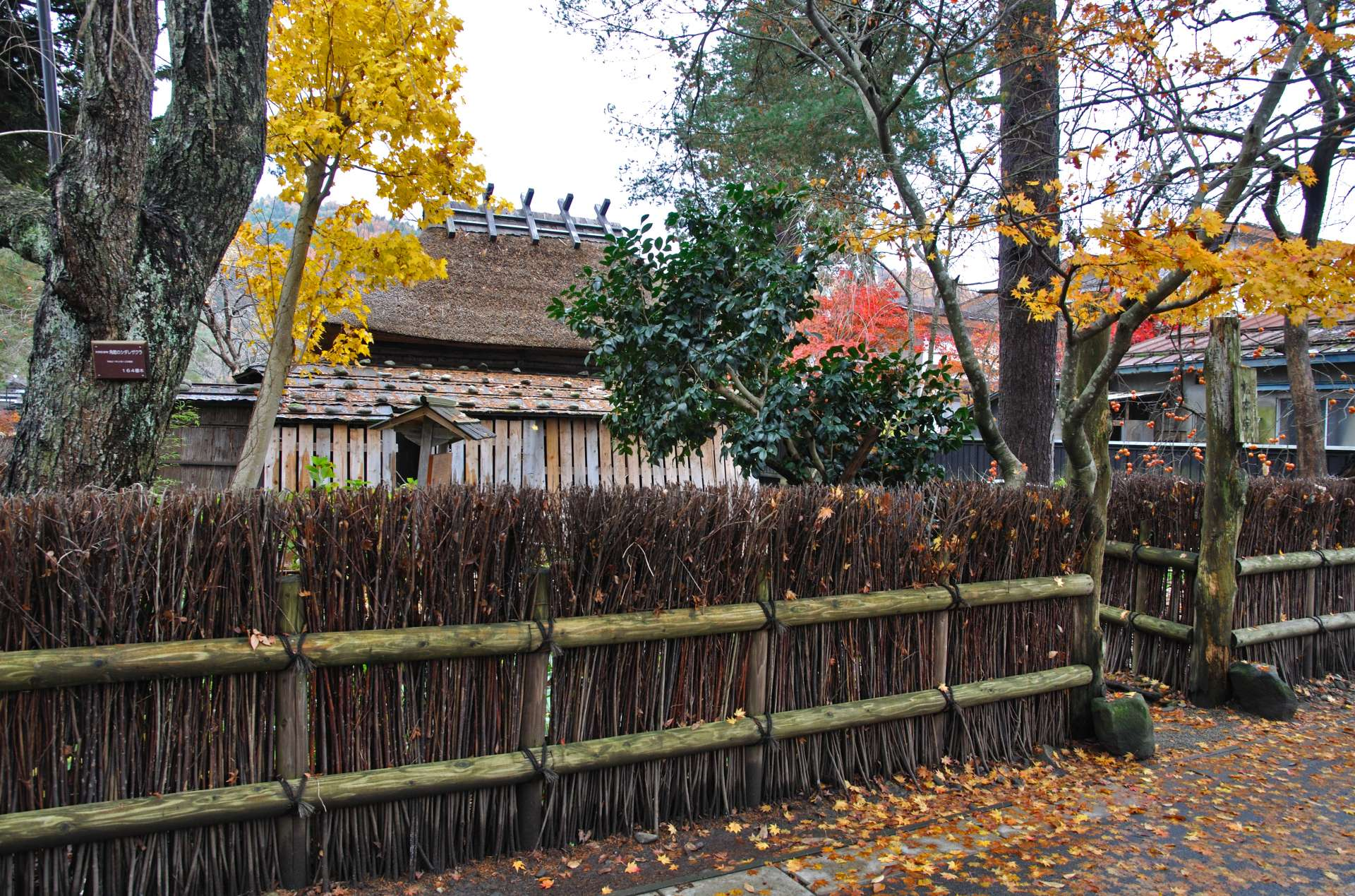 Fence wall and fall foliage