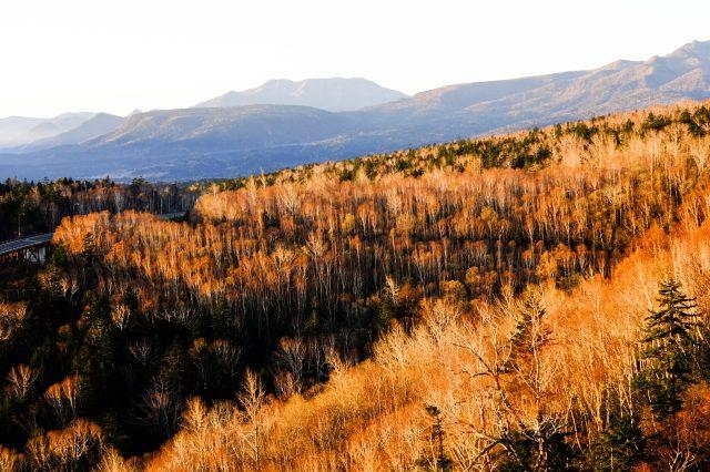 三国峠 秋天辽阔的树海之景