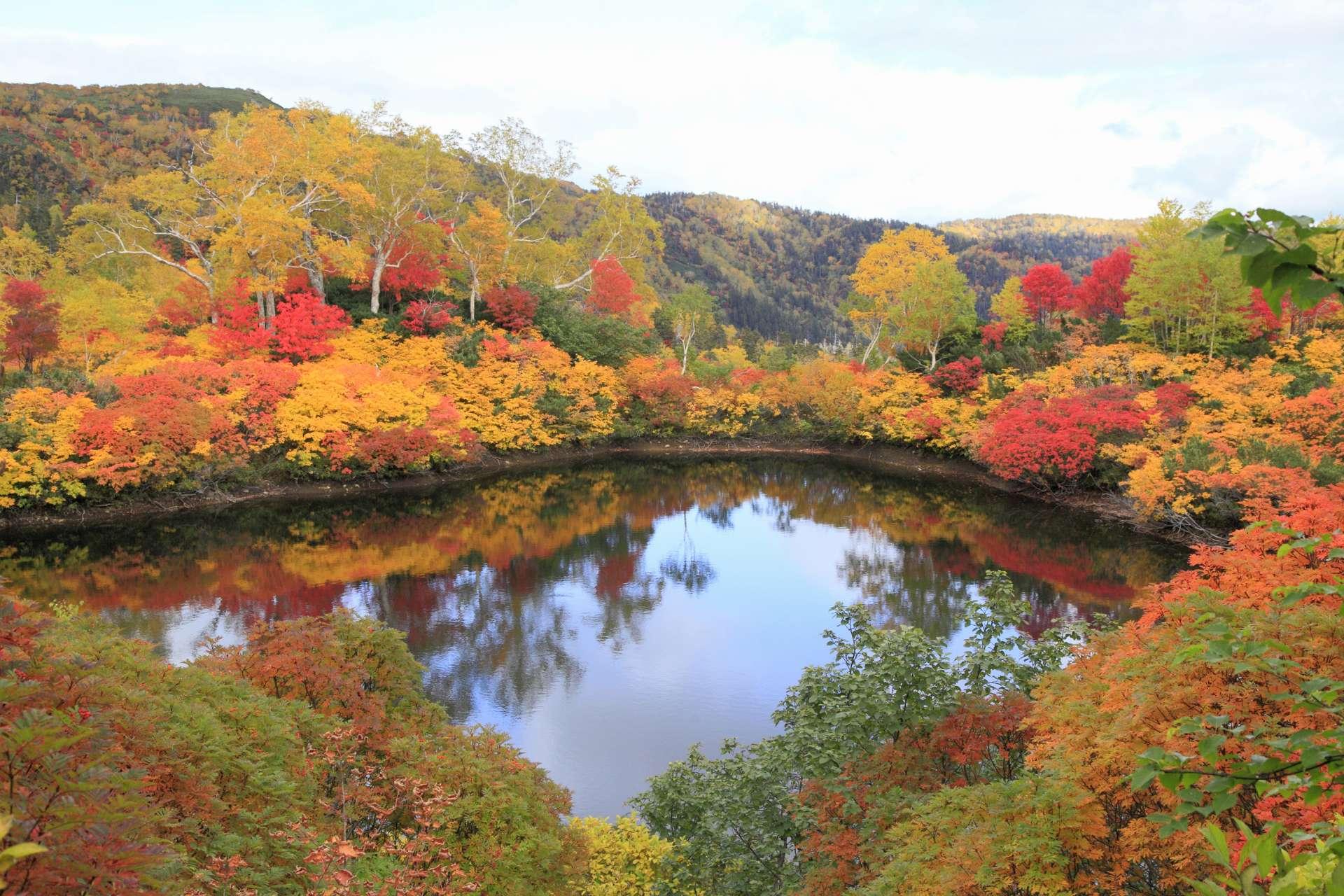 大雪高原沼的紅葉