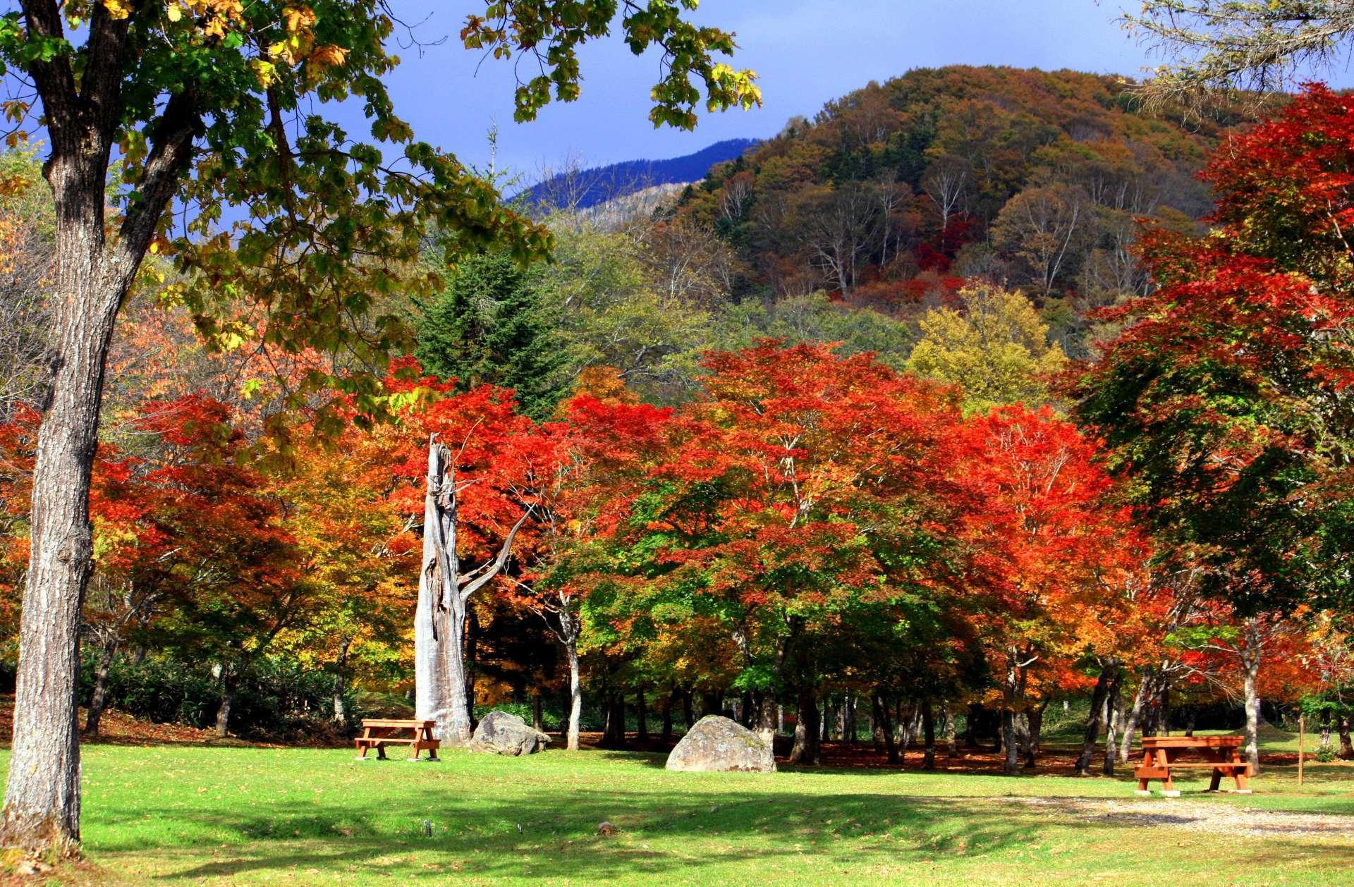 福原山莊的紅葉