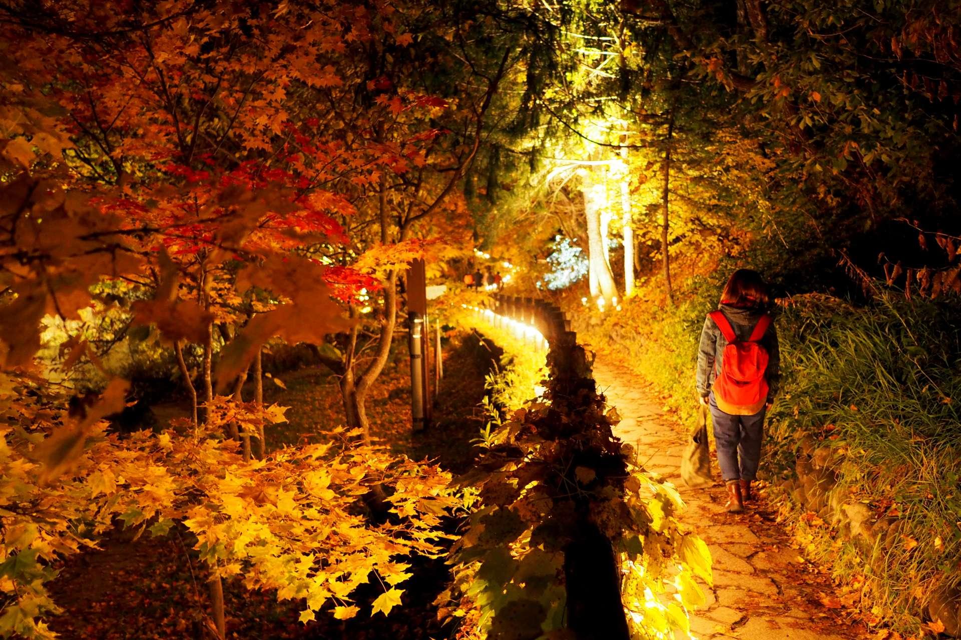 定山溪散策路點燈