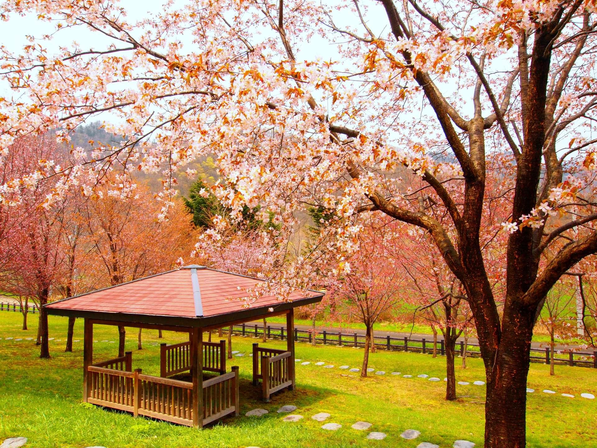 春天的定山溪:三笠山公園