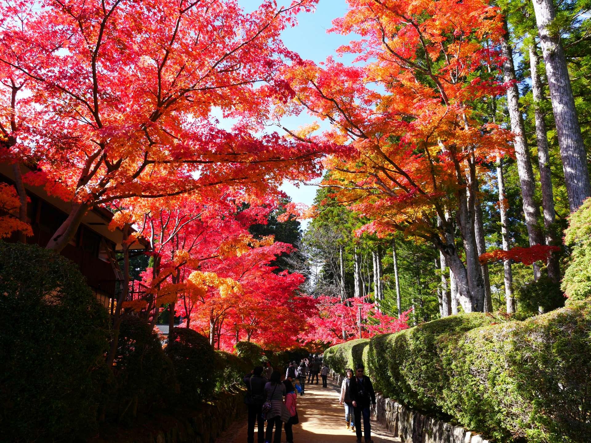 浪漫的紅葉步道!