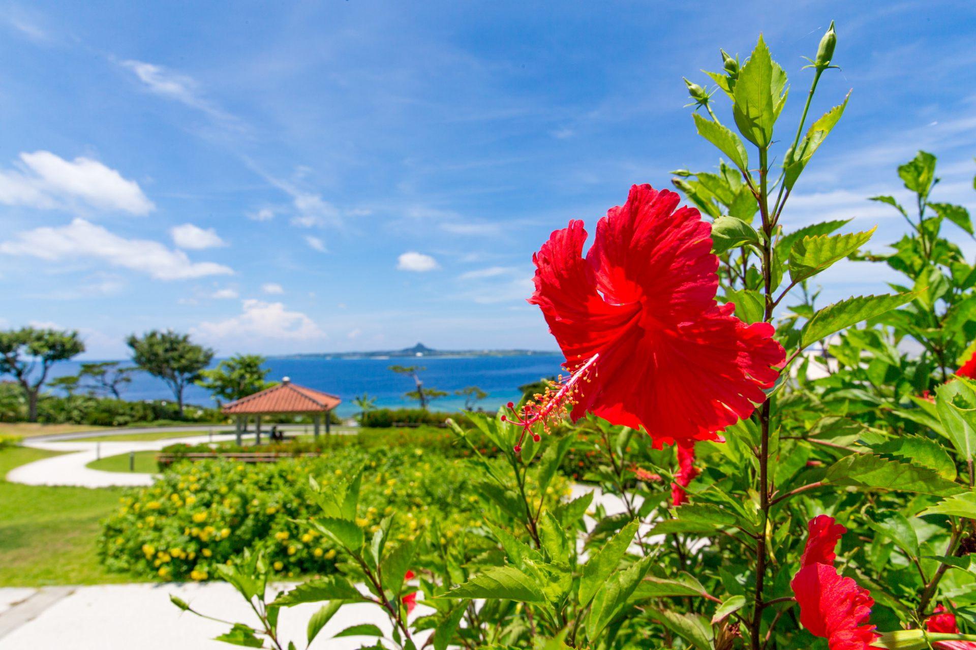 沖繩 扶桑花 海