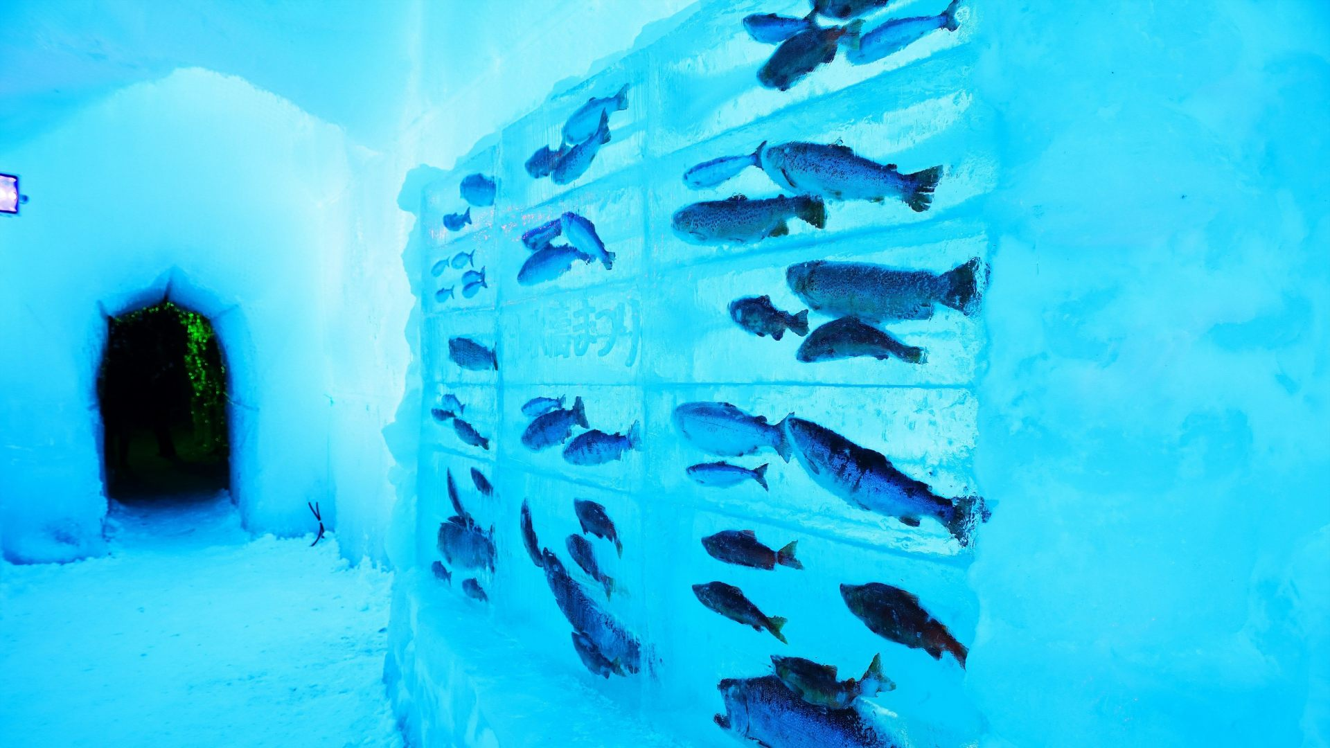 冰的水族館