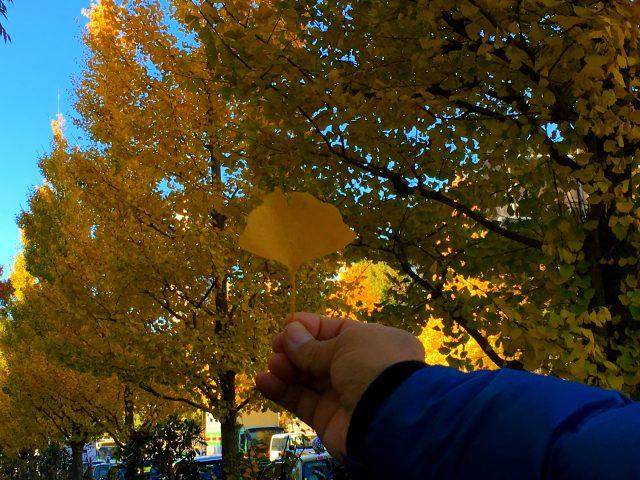 漫步明治神宫外苑・内苑。东京晚秋的亮丽风景线♡