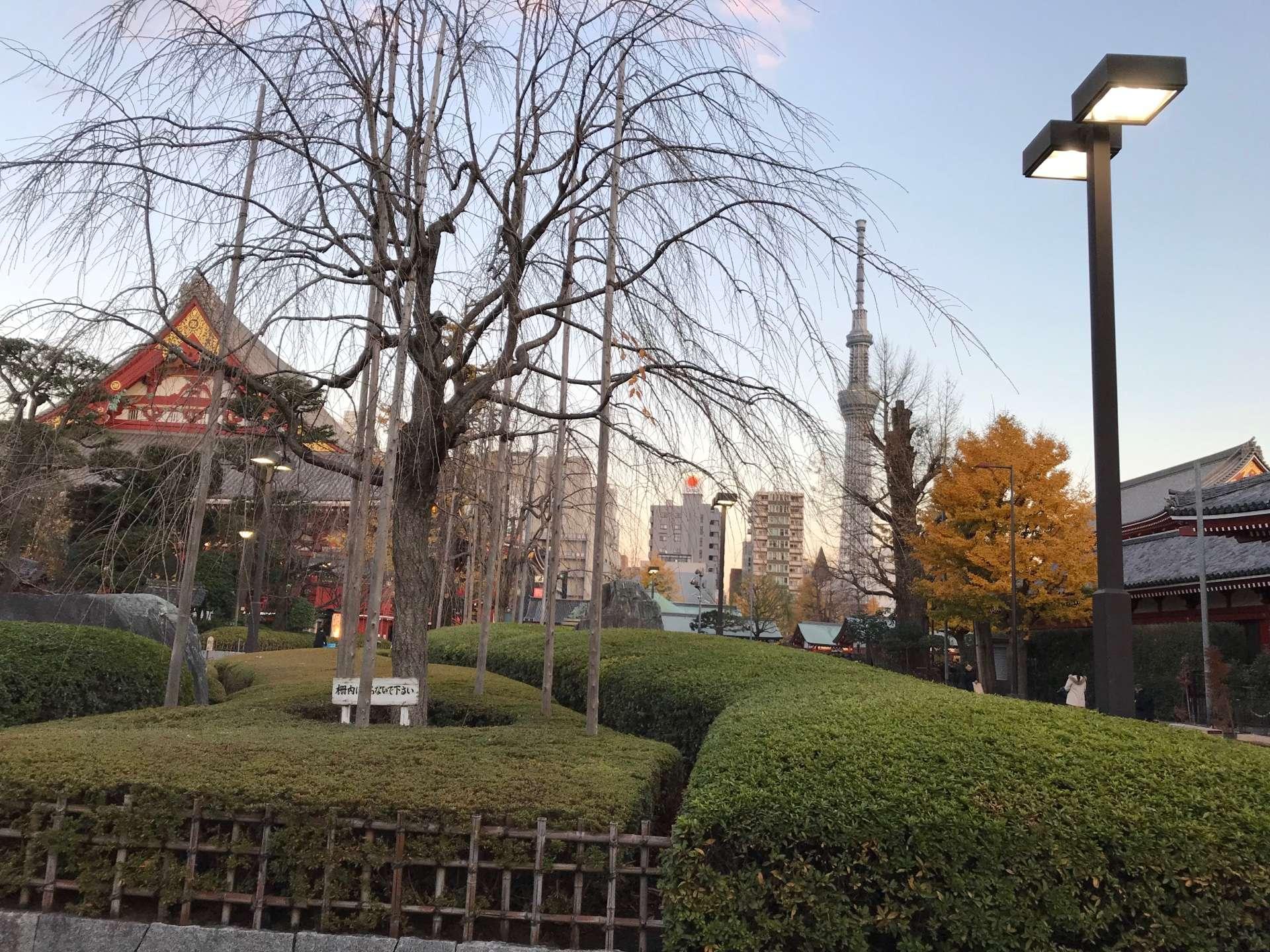 从浅草寺望去的晴空塔