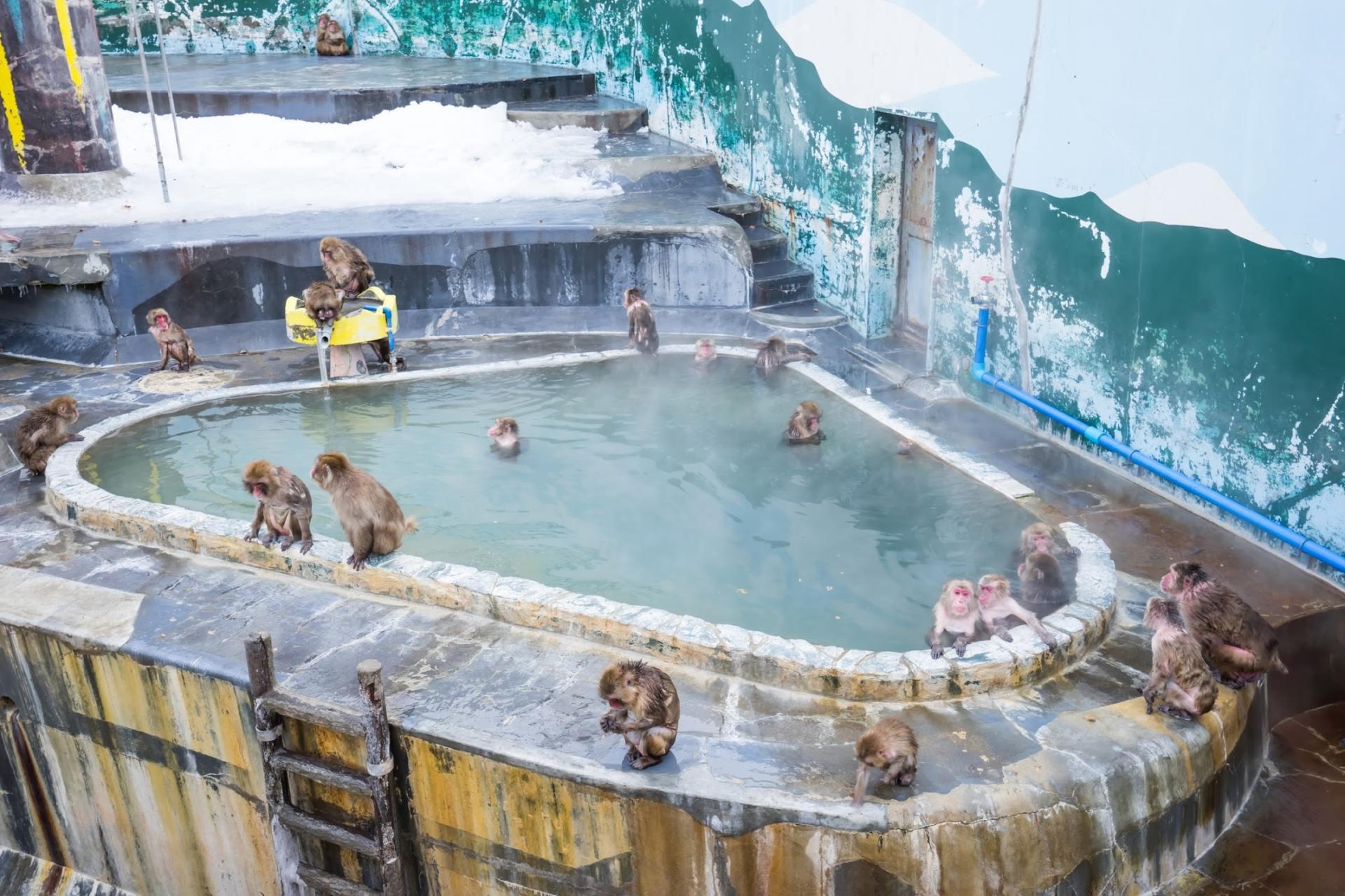 Monkey Hot Springs