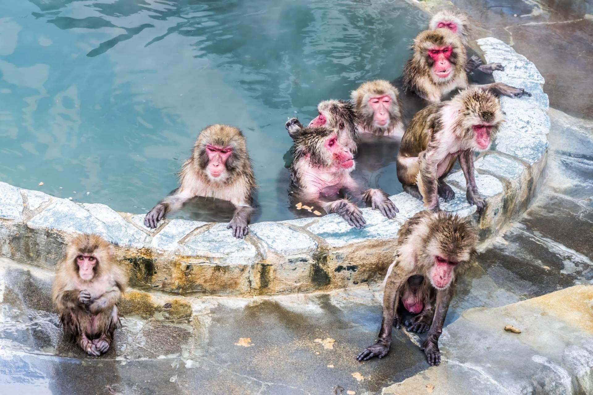 猴子们看上去好舒服的样子