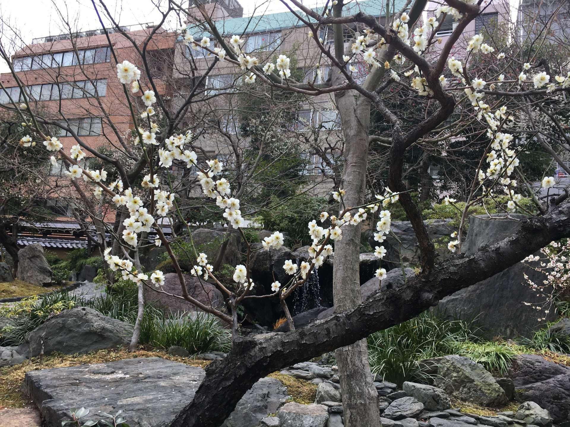 清新雋永的梅花帶來了春天的信息