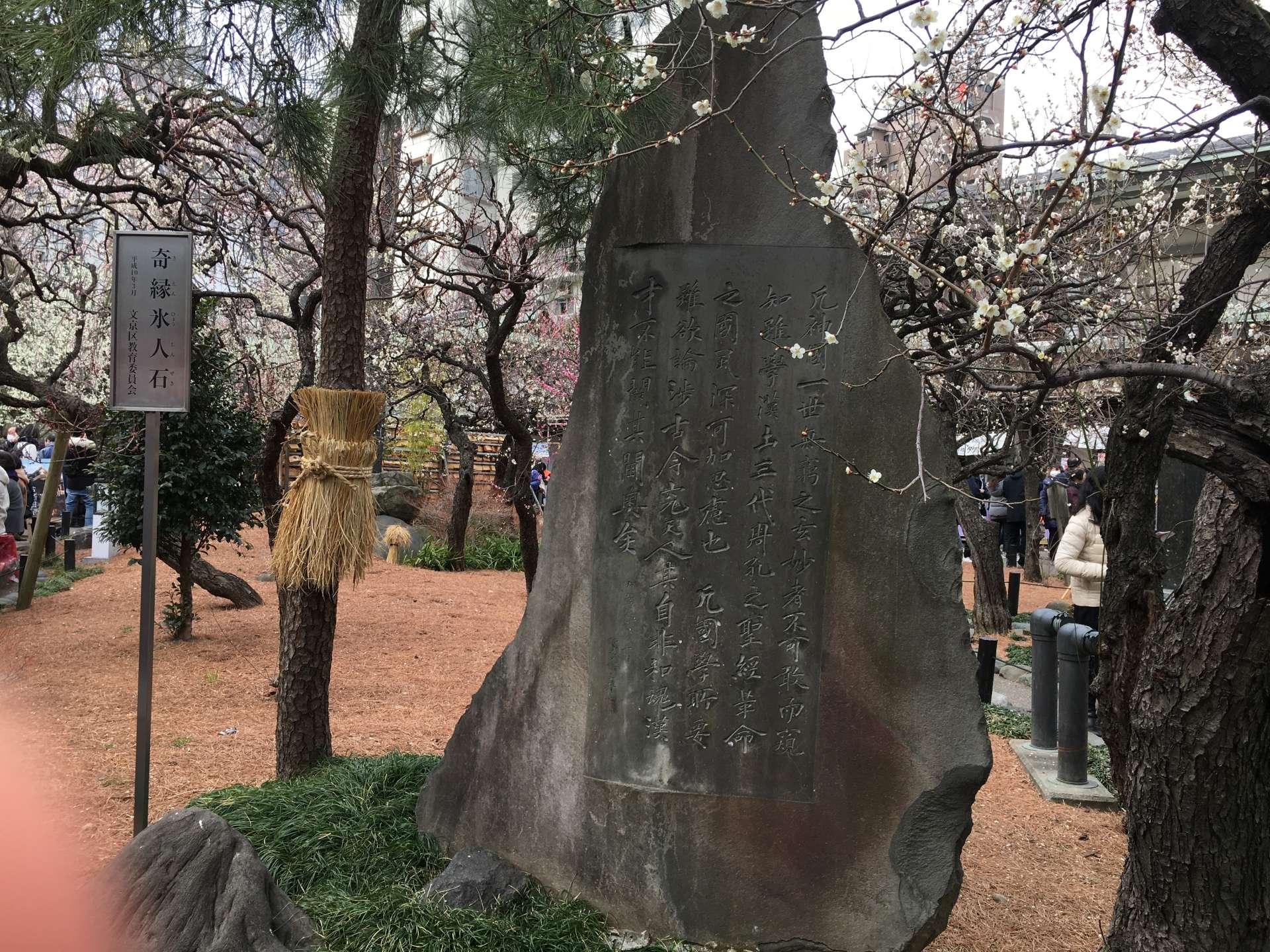 梅花映襯下的古老石碑
