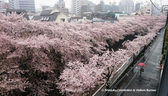 樱花与都电的美丽景色