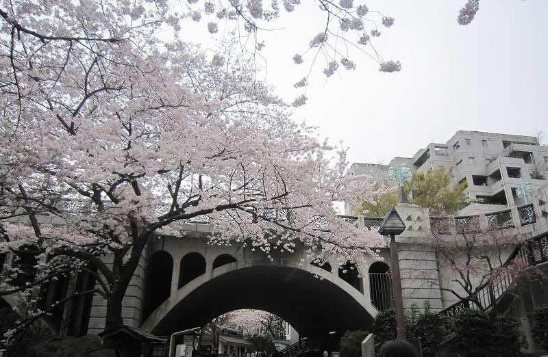 美丽的拱形音无桥与漂亮樱花的完美搭配