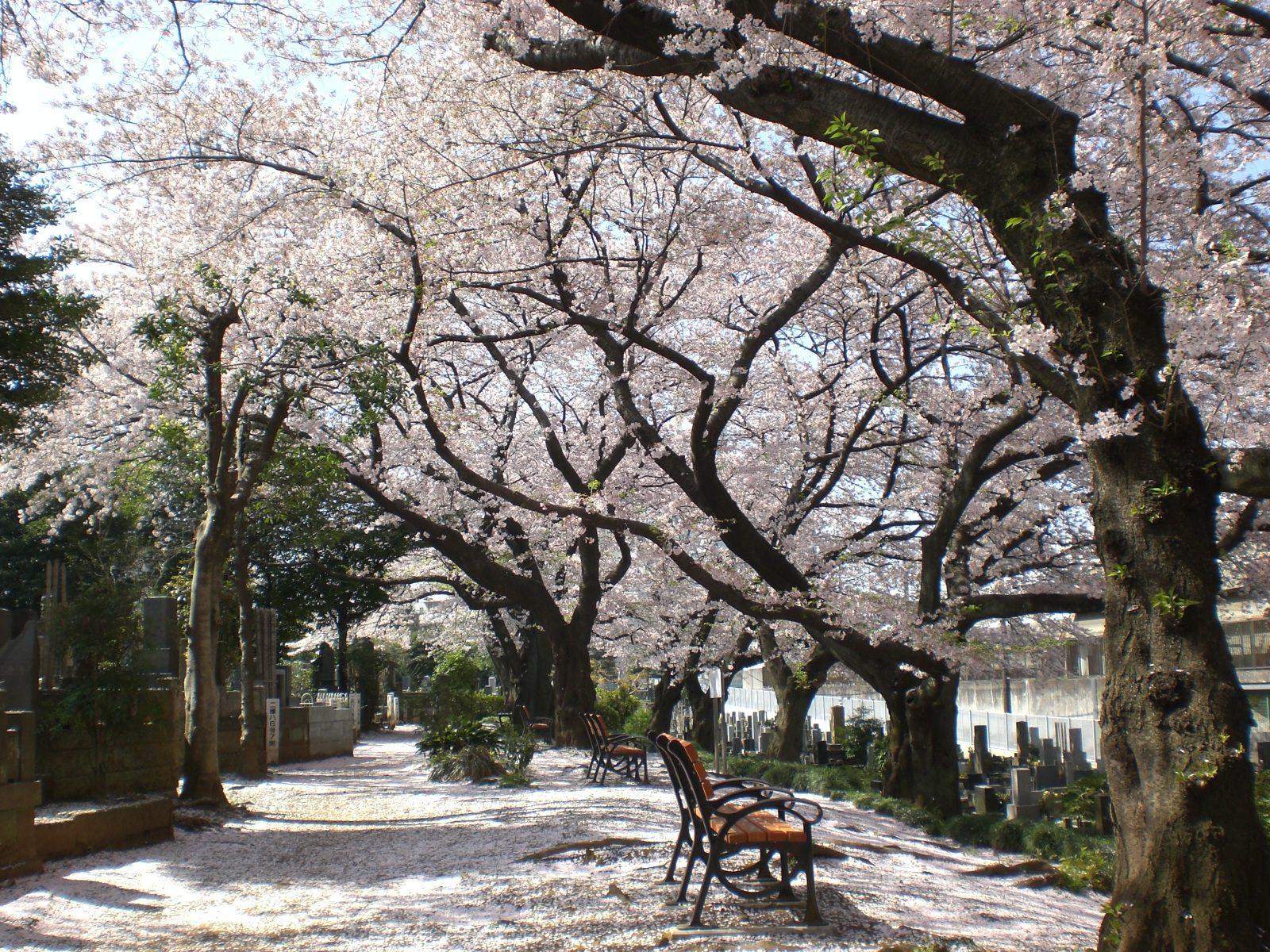 Somei Reien Park, a 13-minute walk from Koshinzuka