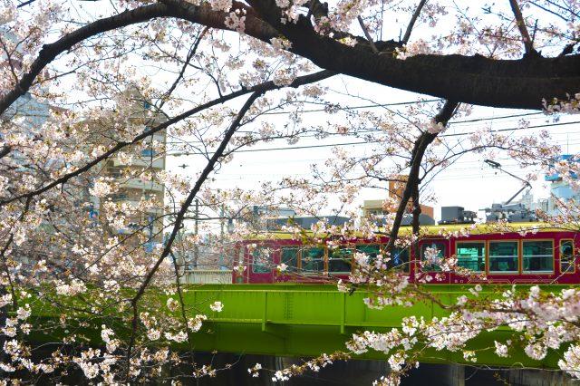 櫻花與都電的美麗景色