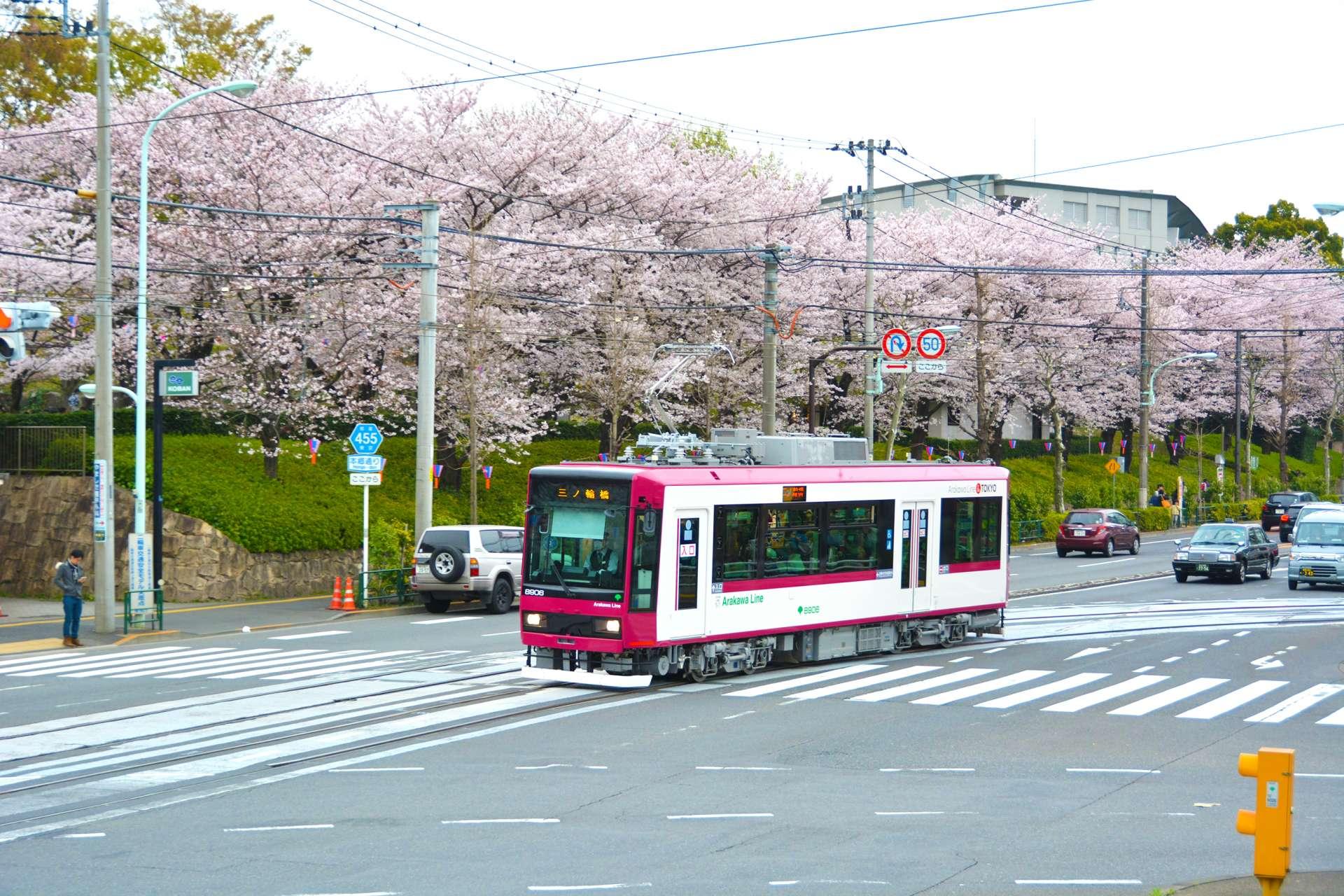 Tokyo Sakura Tram (都電荒川線)的沿線有許多賞櫻勝地!