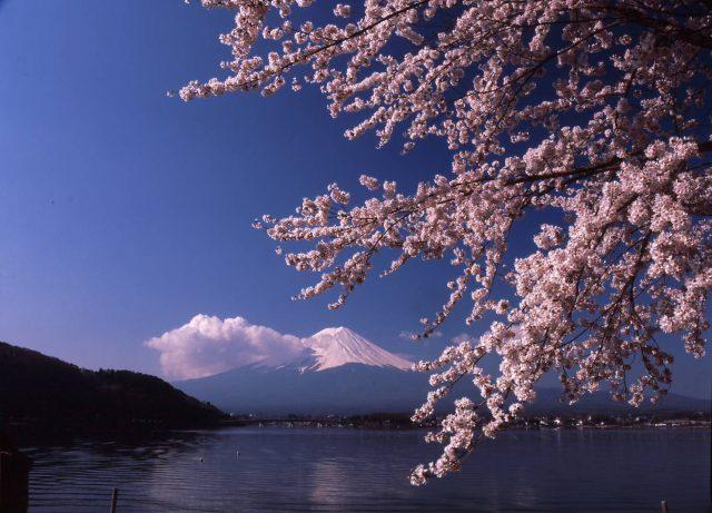 如果符合天候條件的話,可以在湖面上看到倒映的逆富士山。
