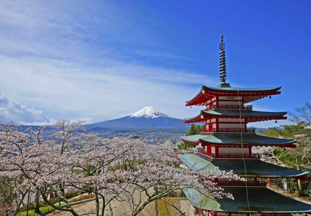 青空中映照著美麗的紅色五重塔和櫻花