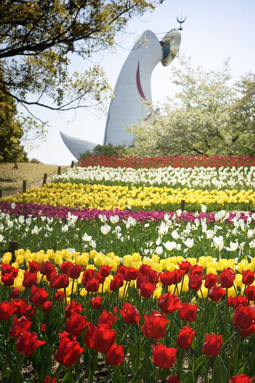 在萬博紀念公園能欣賞到鬱金香依照顏色排列的美景
