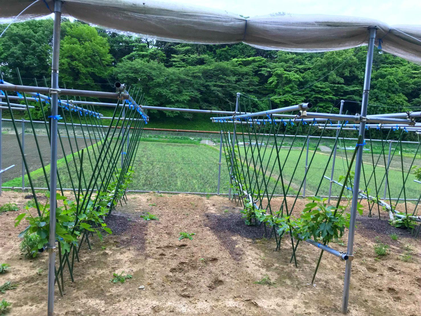 各种农作物