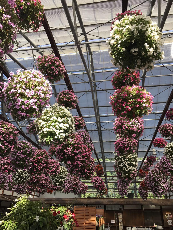悬挂在天井的花卉