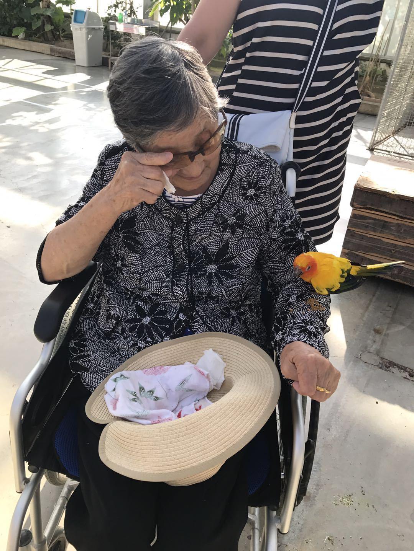 与老奶奶互动的金刚鹦鹉