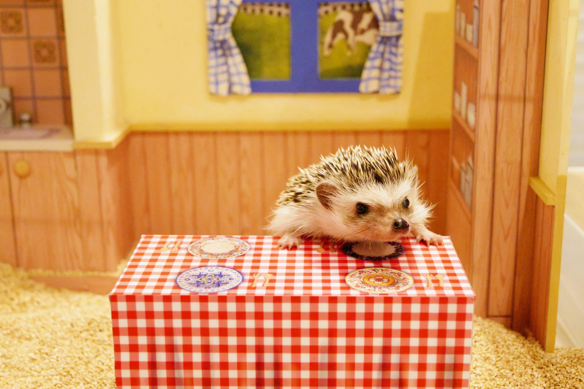 Hedgehog in a Dollhouse