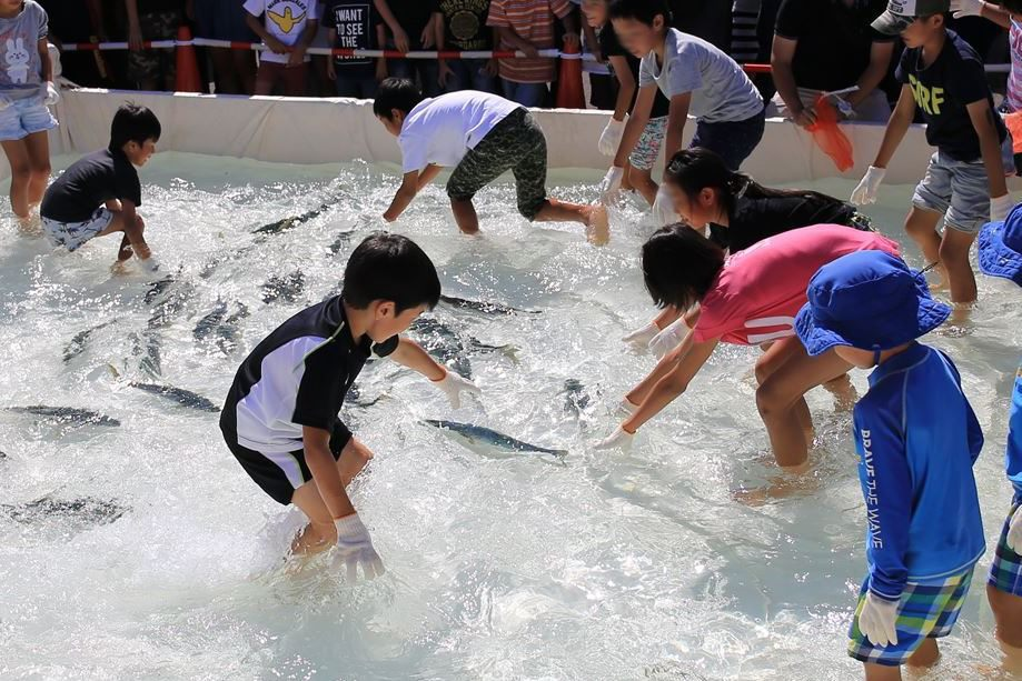 徒手捉鱼体验