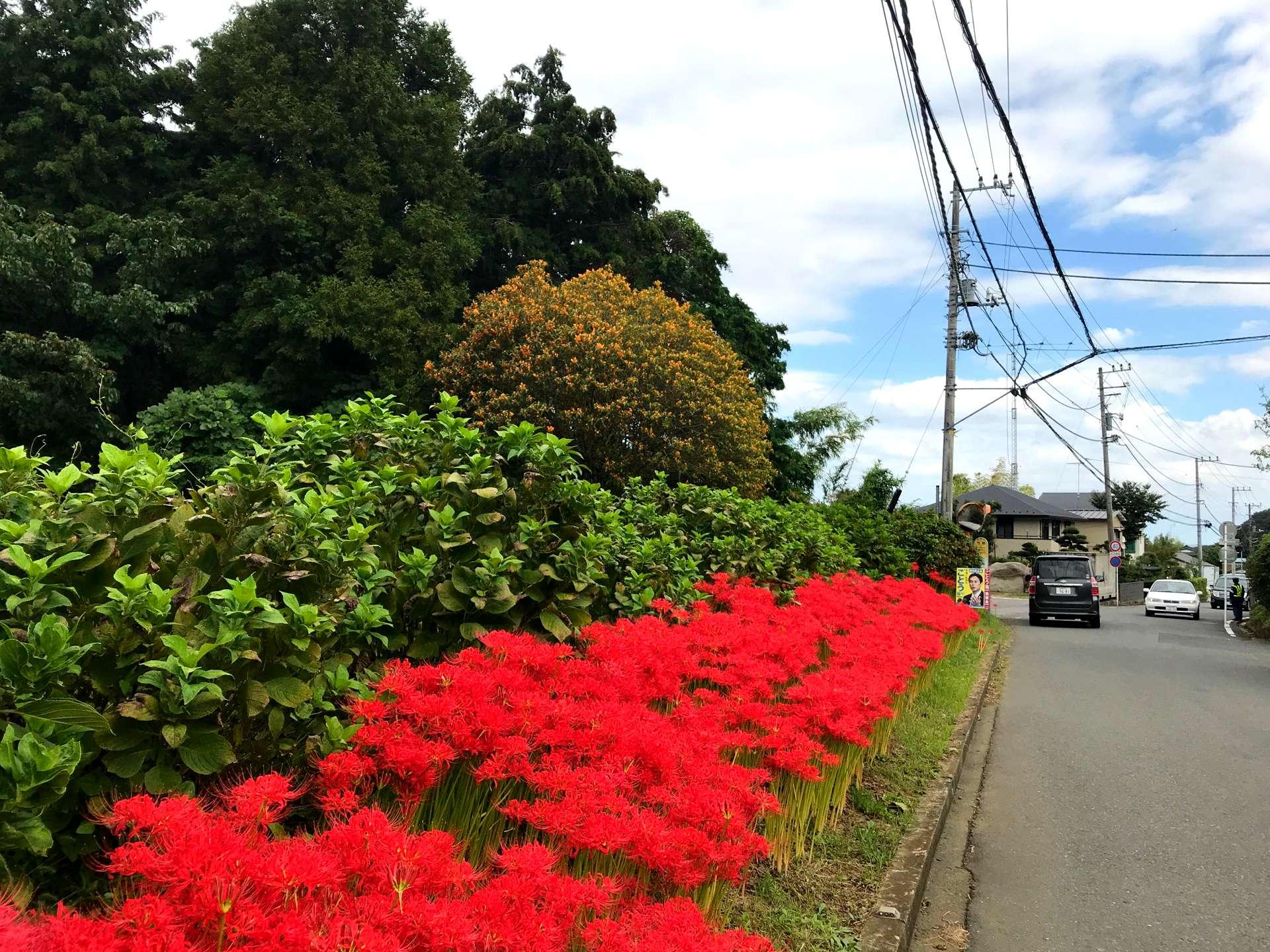 眼前的彼岸花越来越多,花的颜色也越来越浓