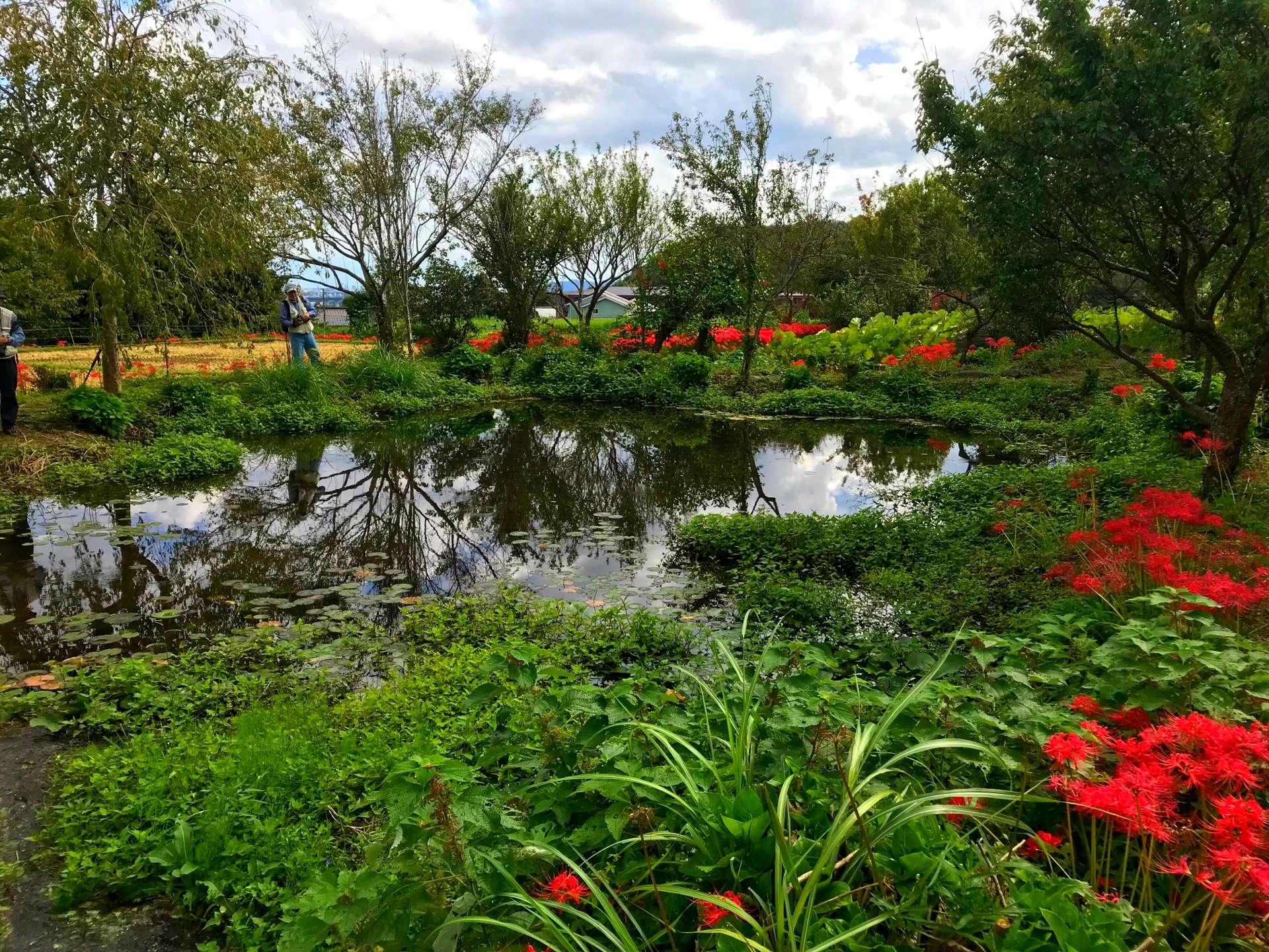 倒映著藍天白雲,樹木花草,還有赤紅的彼岸花的池塘