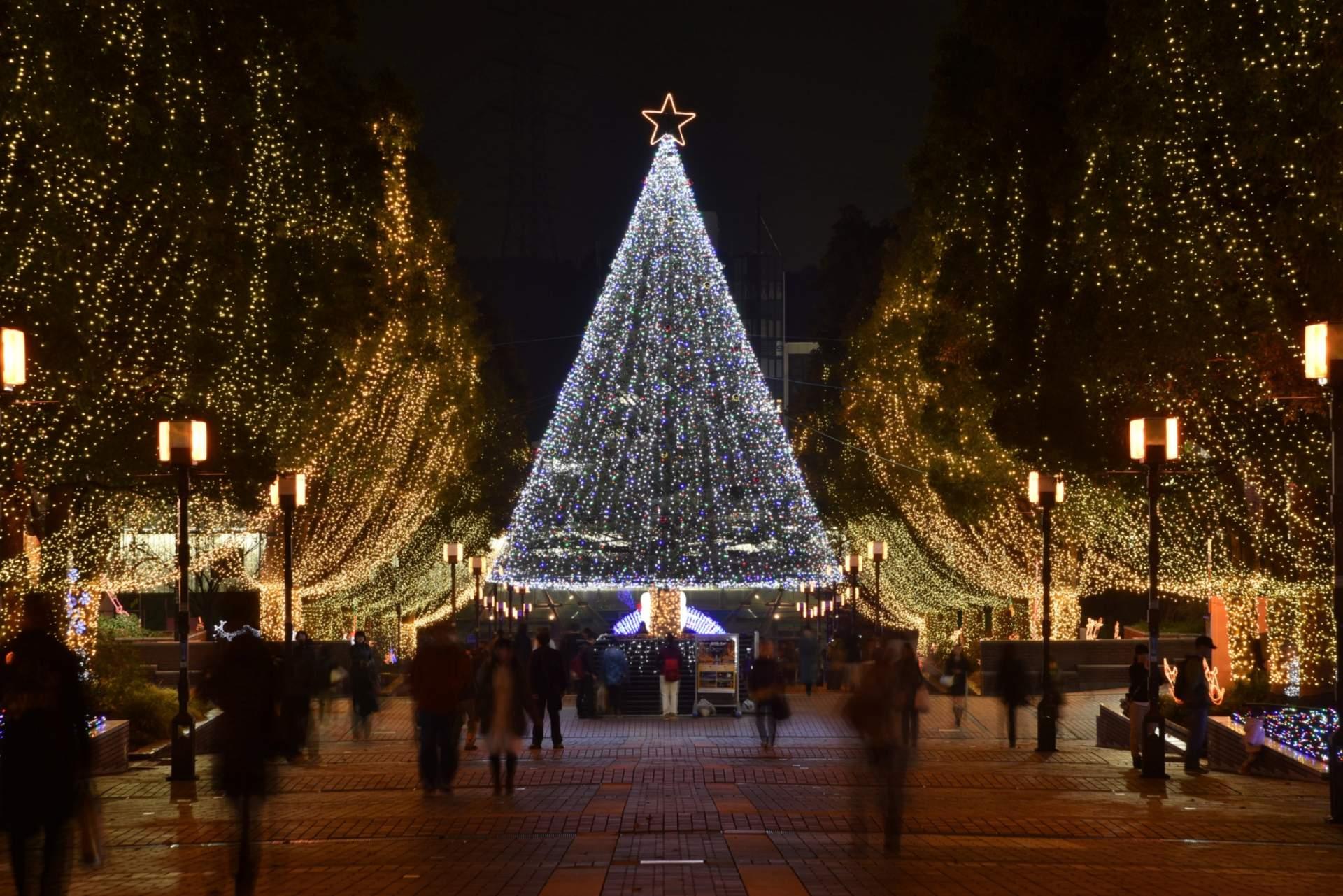 放在中心的树木是一棵真正的日本冷杉