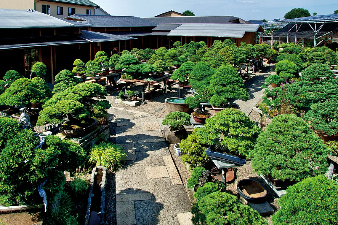 The narrow paths are lined with unique and beautiful bonsai