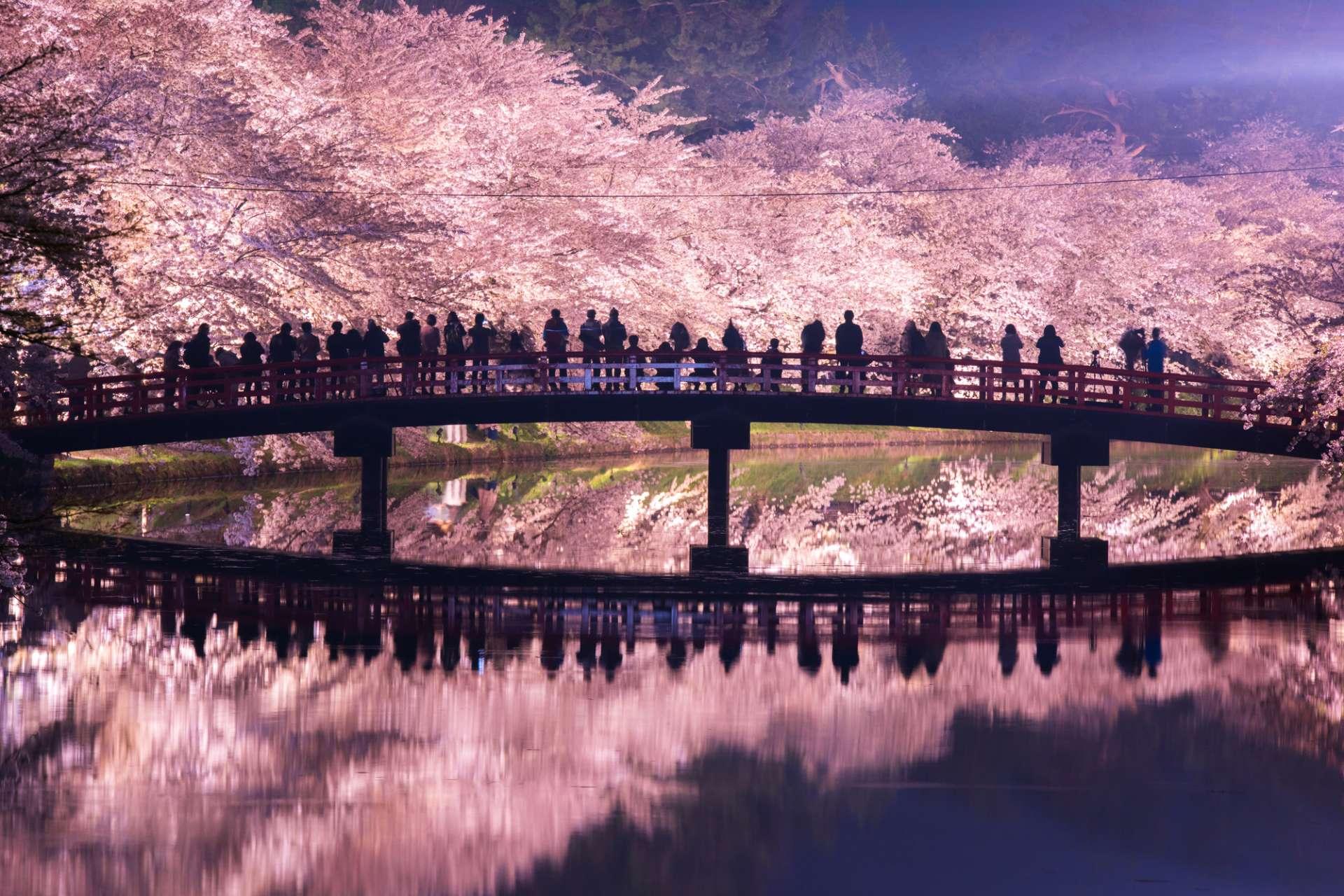 灯光下的樱花充满着梦幻色彩