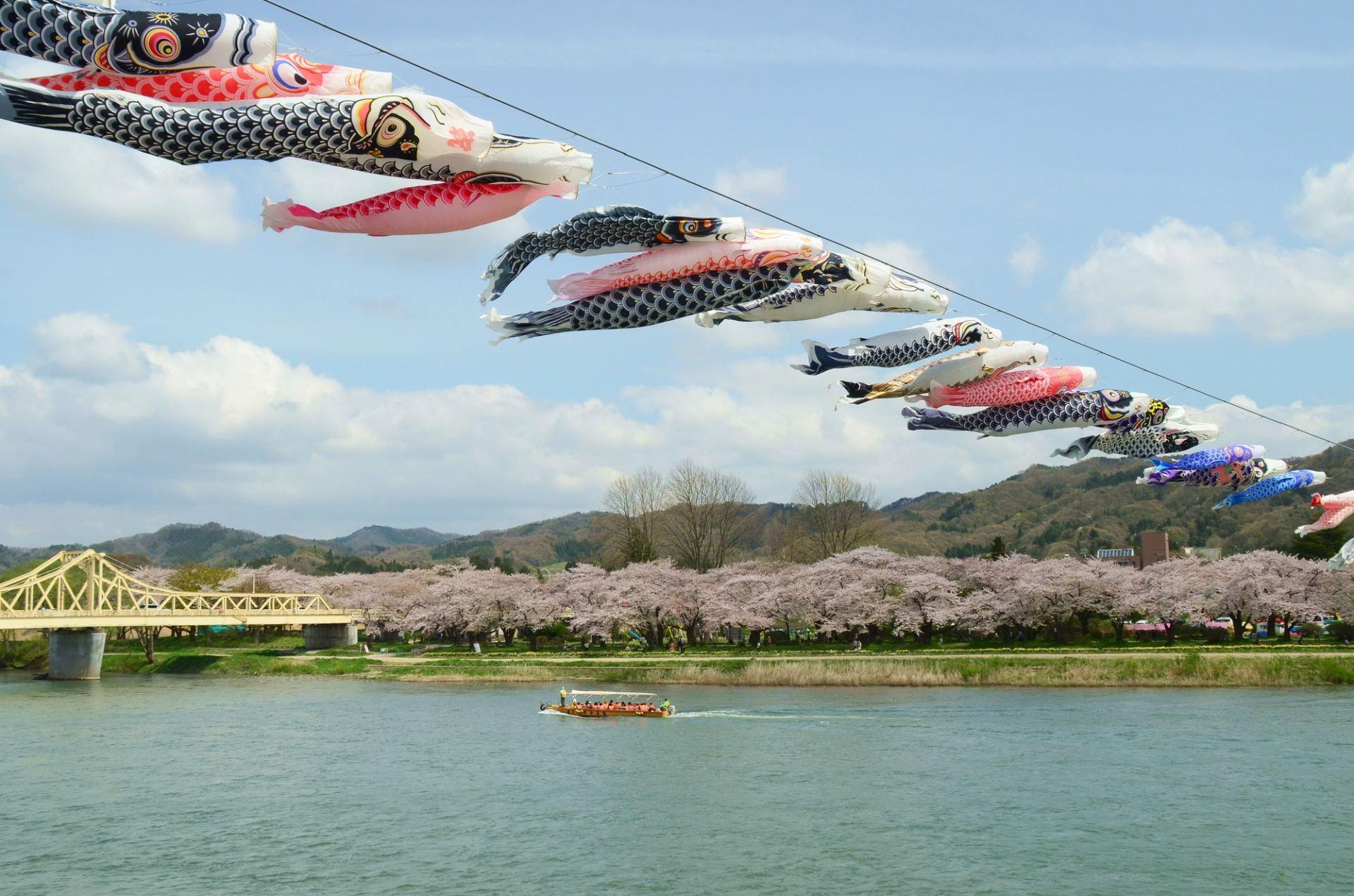 在北上川高空随风飘舞的鲤鱼旗