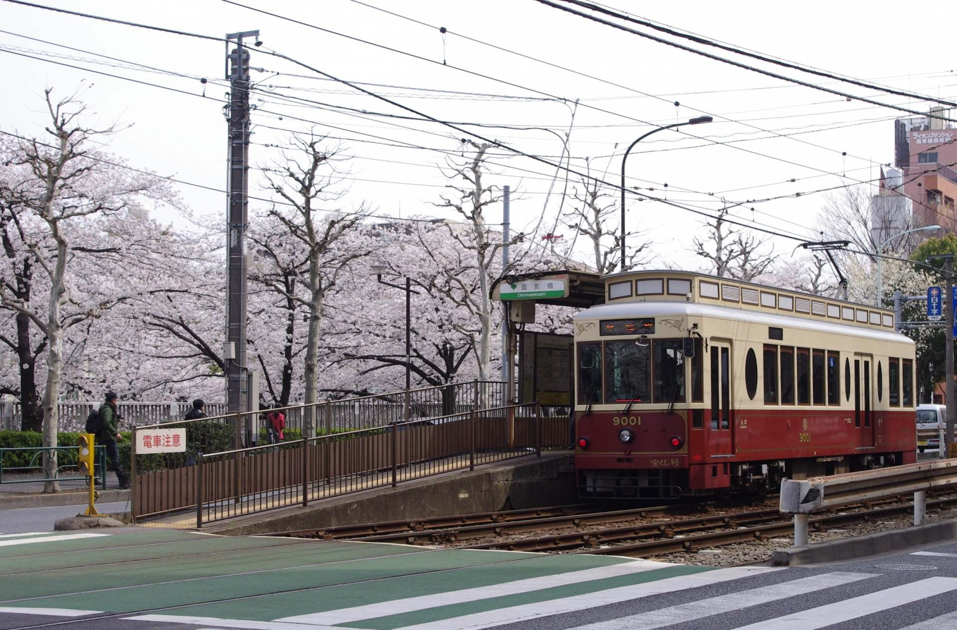 The cherry blossoms by the Tokyo Sakura Tram's (Toden Arakawa Line) Omokagebashi stop are also beautiful