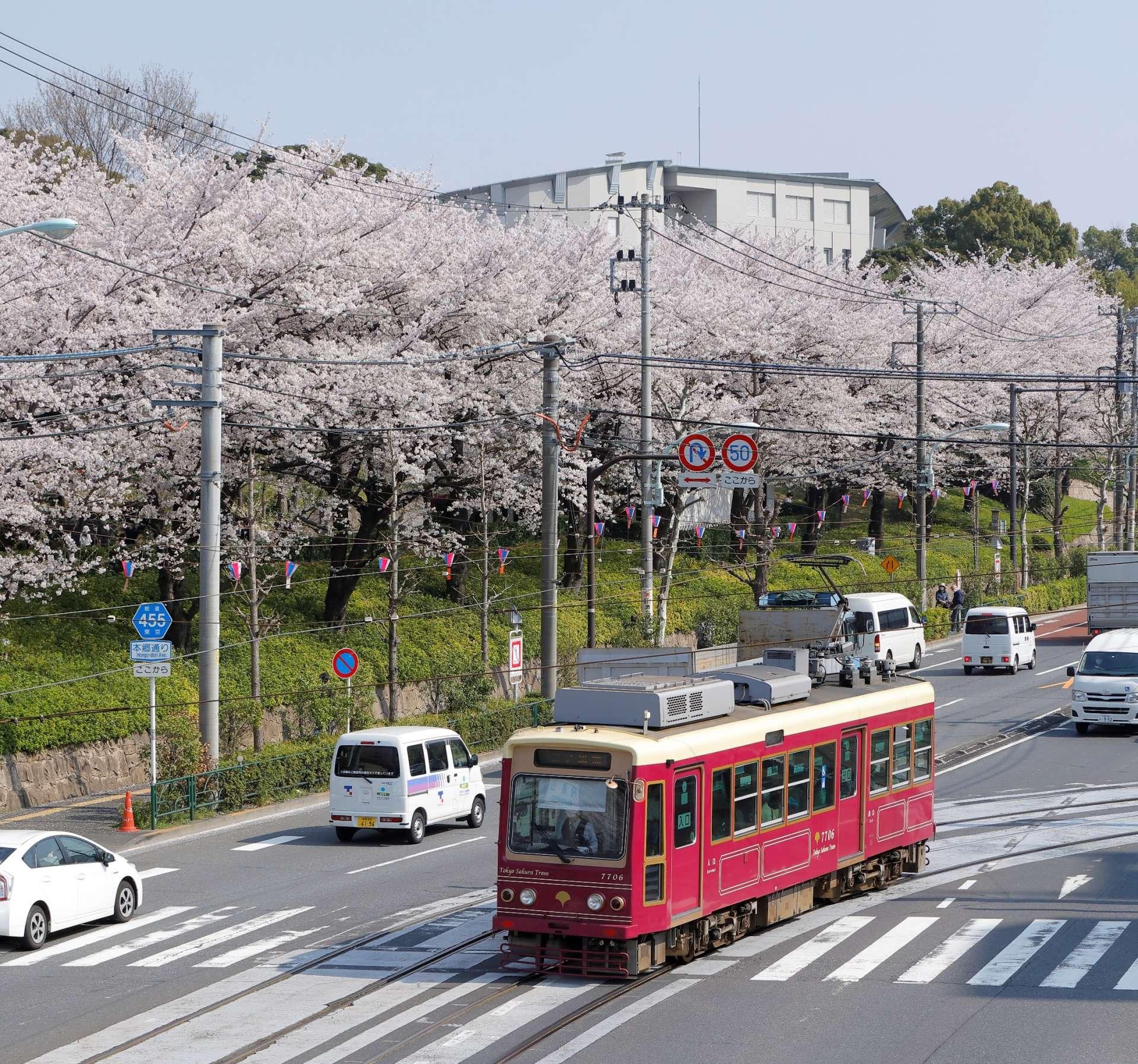 飞鸟山公园的樱花与Tokyo Sakura Tram(都电荒川线)