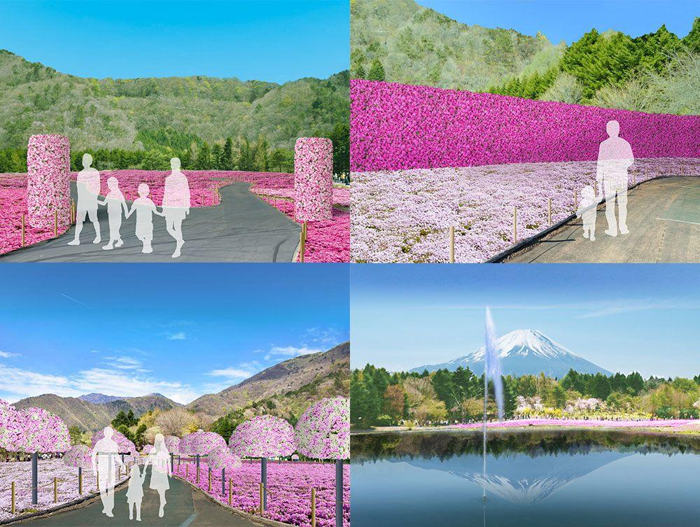 在粉嫩芝樱环绕下拍下美丽照片吧! ※图片仅供参考