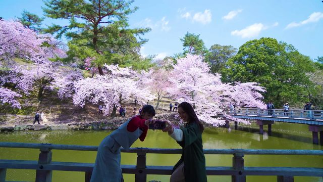 奈良有许多超上相的美景地点