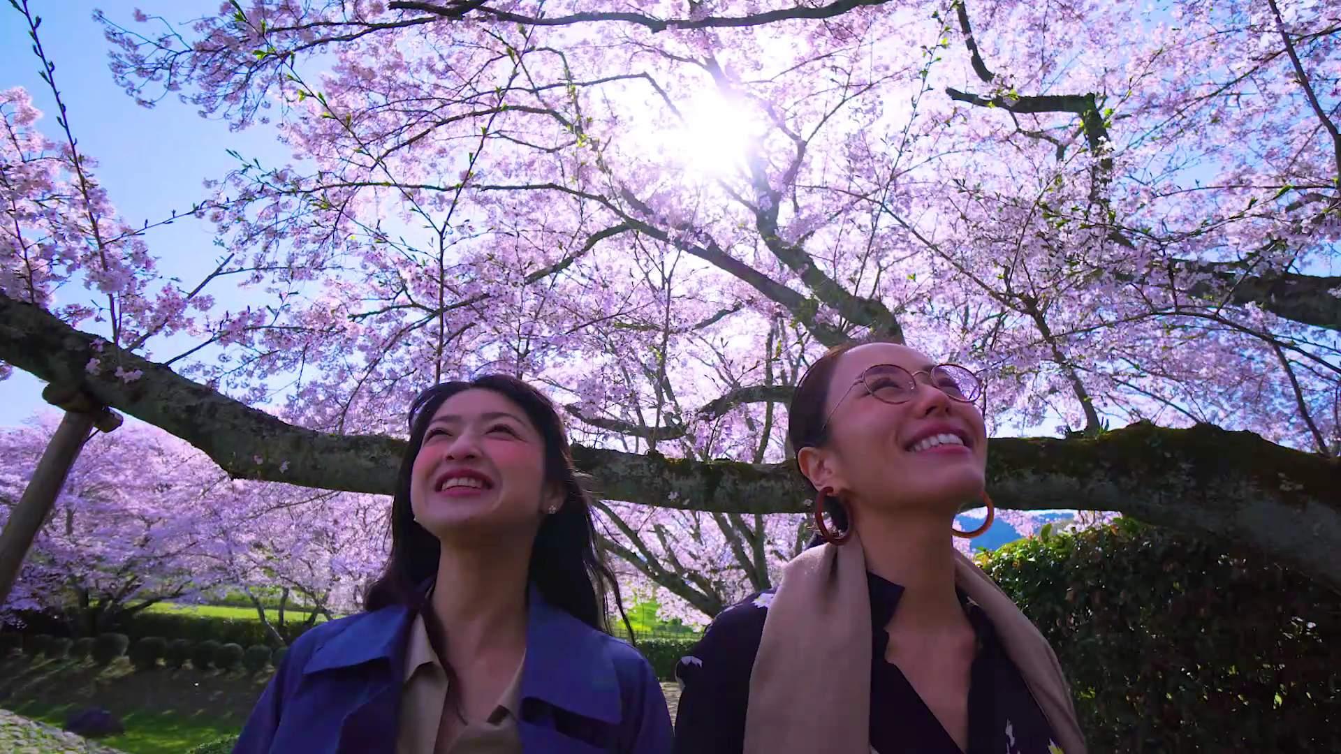 在沉稳舒适的氛围中享受樱花树下的散步