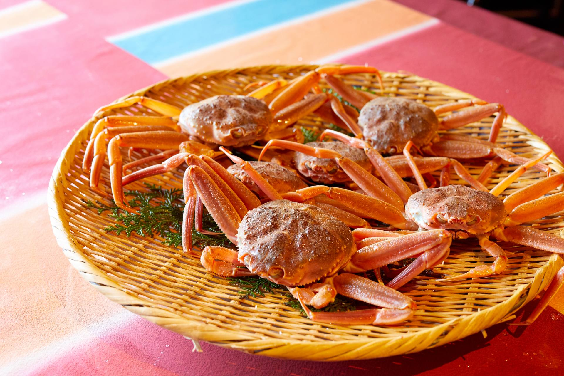 The female snow crab used for cooking. Cute and round eyes.