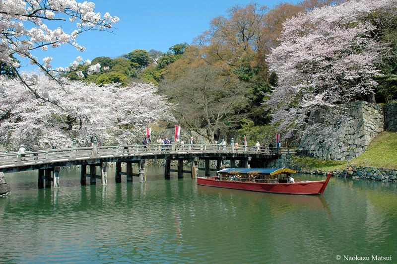 This is the spring pleasure boat. Cherry blossom viewing season is buzzing with large numbers of visitors.