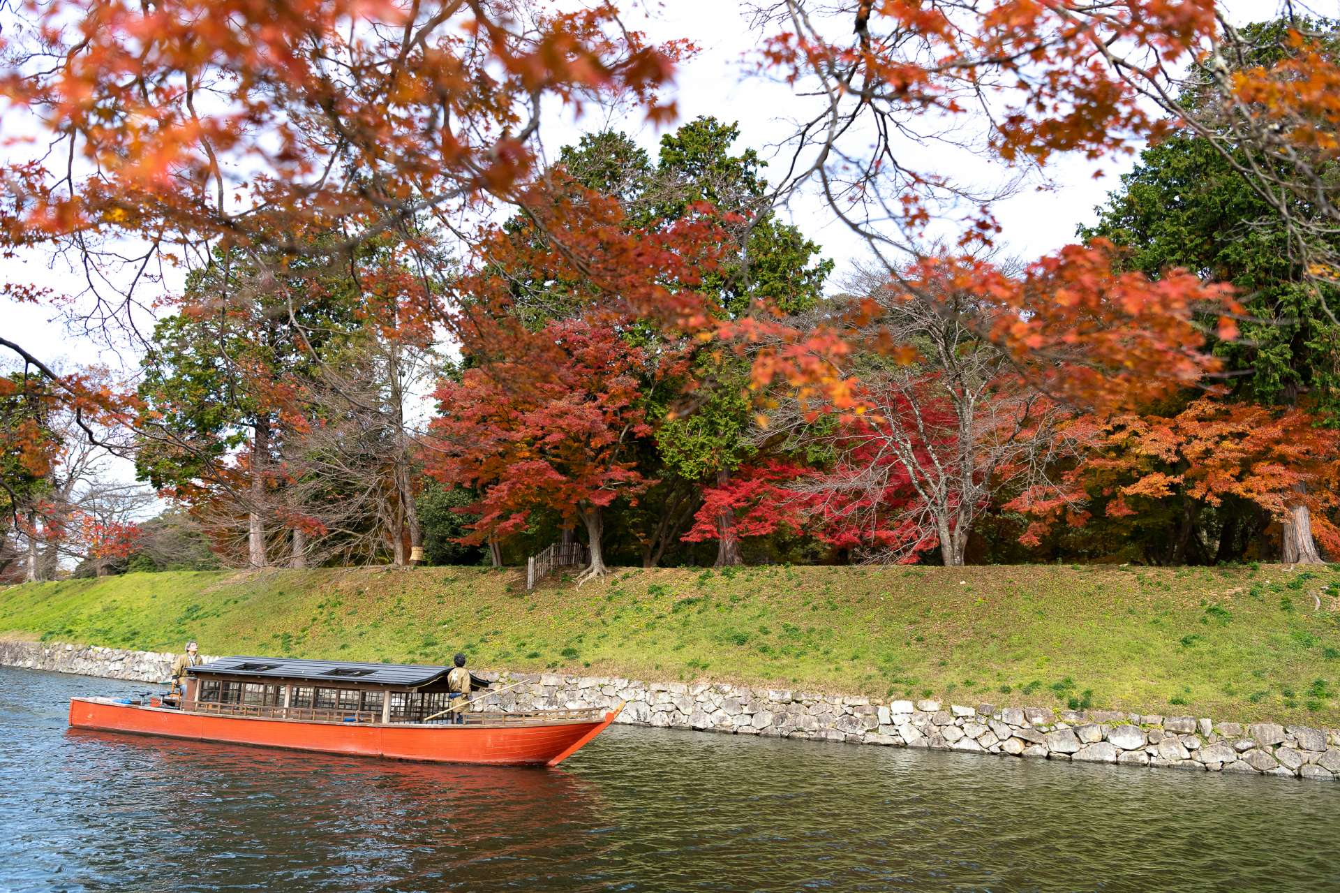 During the fall leaves season, you can enjoy the best scenery possible with the contrast of red and green leaves.
