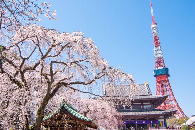 櫻花・古剎・東京鐵塔
